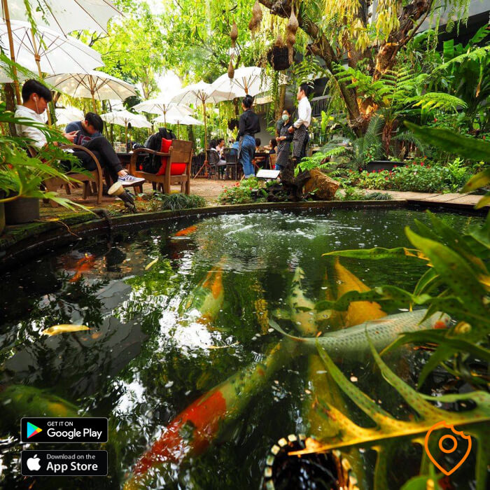 fern forest cafe koi pond