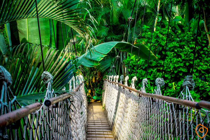 Things to do in Thailand - Jungle Trekking