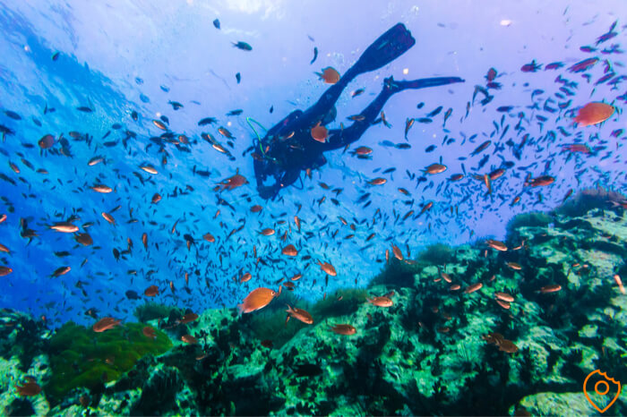 Things to do in Thailand - Scubadiving Koh Tao
